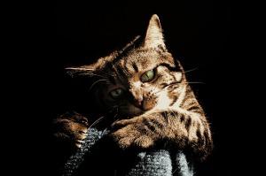 cat-1815125_640
