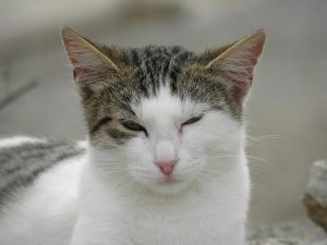 cat-812744_640