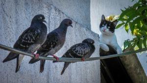 cat-1857404_640