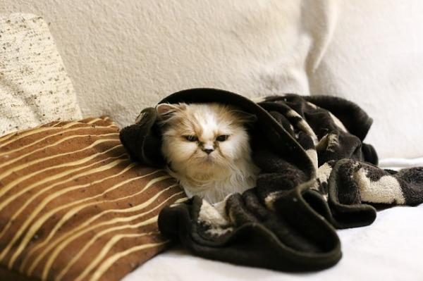 cat-1907210_640