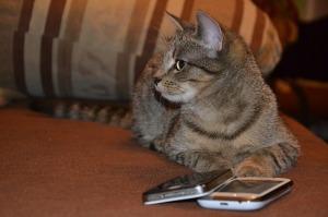 cat-281260_640