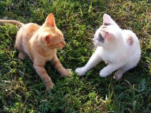 cats-88516_640