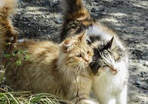 https://pixabay.com/en/cat-stray-animal-fur-cute-kitten-1259163/