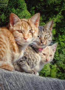 cat-2039381_640