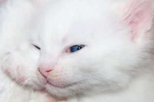 https://pixabay.com/en/cat-kitten-cat-baby-pet-cute-red-2201448/