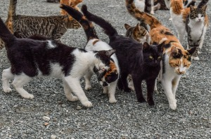 cats-2009175_640