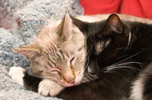 cats-277116_640