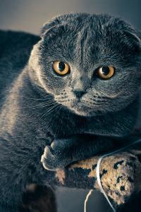 cat-1057829_640
