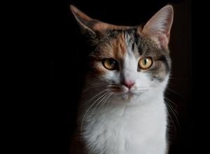 cat-2075273_640