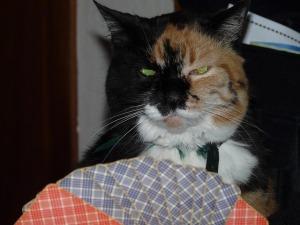 cat-55509_640