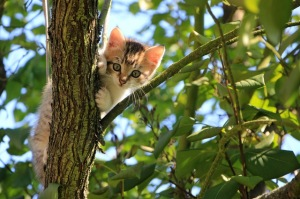 catintree2