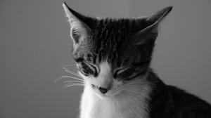 cat-2119814_640