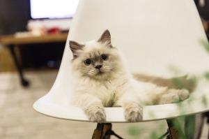 cat-2224201_640