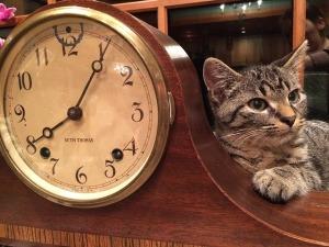 cat-1113330_640