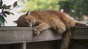 cat-2363938_640
