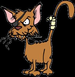 cat-47896_640