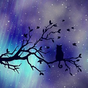 https://pixabay.com/en/texture-background-cat-tree-2305386/