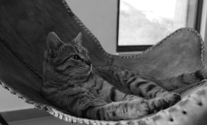 cat-1779716_640