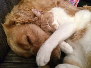 cat-and-dog-775116_640 (1)