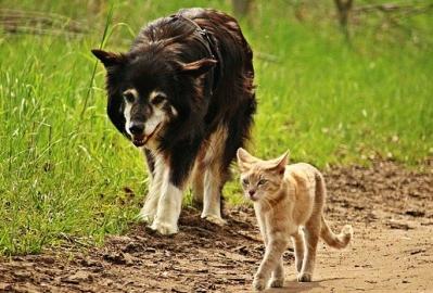 catdogwalk