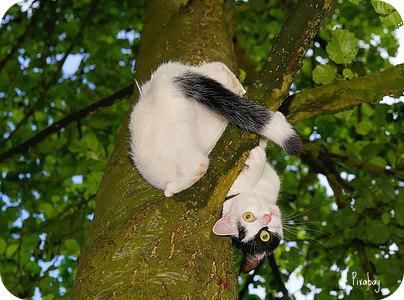 curiouscat