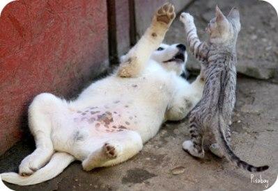 https://pixabay.com/en/dog-cat-friendship-play-funny-2124523/