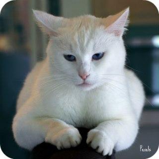 https://www.pexels.com/photo/animal-kitten-cat-pet-7517/