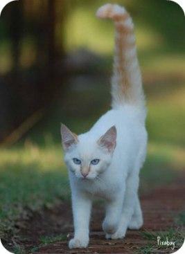 https://pixabay.com/en/cat-walking-pet-animal-mammal-191912/
