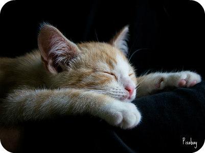 https://pixabay.com/en/cat-cozy-sleep-good-night-tired-1056661/