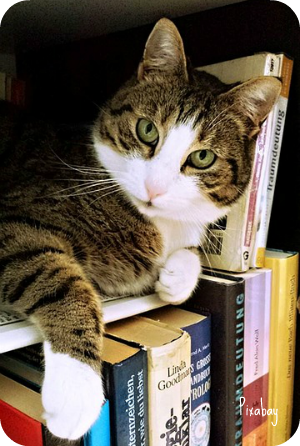 https://pixabay.com/en/cat-tamara-fur-paws-ears-read-718936/