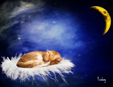 https://pixabay.com/en/cat-good-night-sleep-tired-moon-2124168/