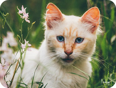 https://pixabay.com/en/cat-animal-kitten-nature-grass-2606363/
