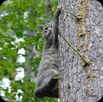 https://pixabay.com/en/cat-felidae-dog-fear-hunting-tree-57881/