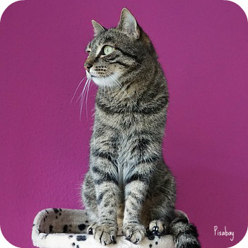 https://pixabay.com/en/cat-mieze-animals-cat-s-eyes-pride-2356013/
