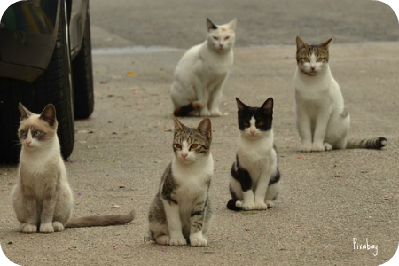 https://pixabay.com/en/cat-kitten-alley-cat-pet-street-1543541/