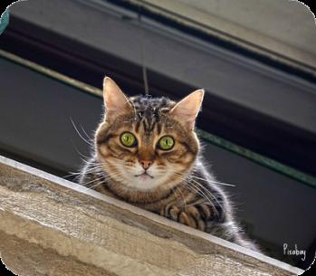 https://pixabay.com/en/cat-window-sill-window-mackerel-1578865/