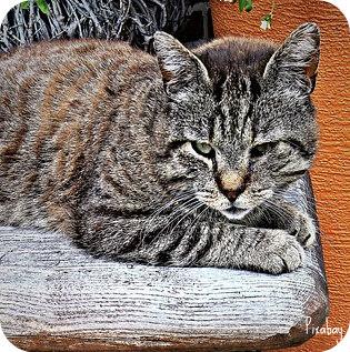 cat-2411939_640