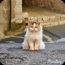 grumpy-cat-290861_640