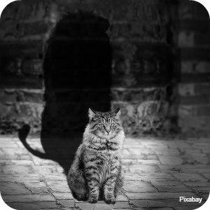 lionshadow