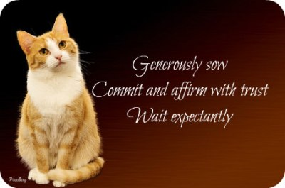 https://pixabay.com/en/cat-background-image-festive-1840854/