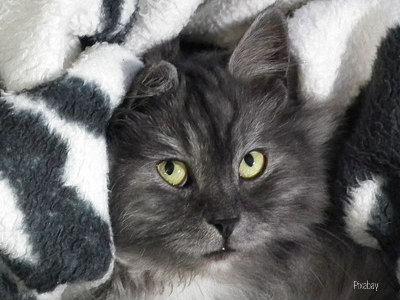 https://pixabay.com/en/cat-pets-animals-cat-eyes-197175/