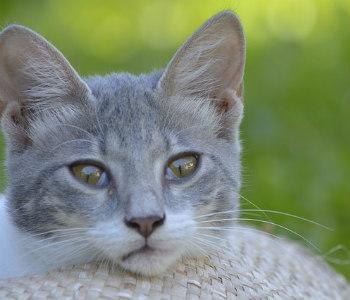 https://pixabay.com/en/pets-cats-thinking-2367286/
