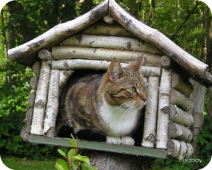 https://pixabay.com/en/cat-mackerel-in-the-bird-house-2251428/