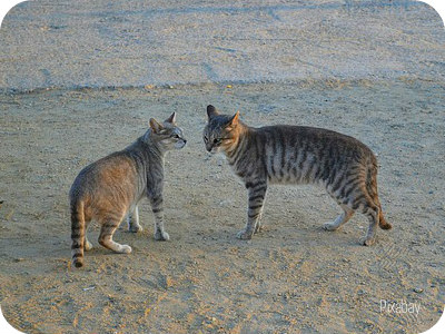 https://pixabay.com/en/two-cats-cats-feral-cats-animals-2760304/