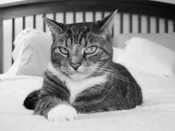 cat-2760791_640