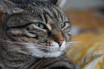 cat-3134990_640