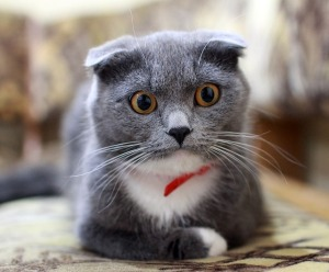 worriedcat