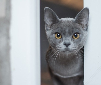 https://pixabay.com/en/animal-cute-cat-kitten-curious-3118722/