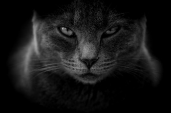 https://pixabay.com/en/cat-moody-angry-close-up-3386220/