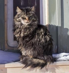 https://pixabay.com/en/cat-cold-winter-animal-pet-feline-845461/